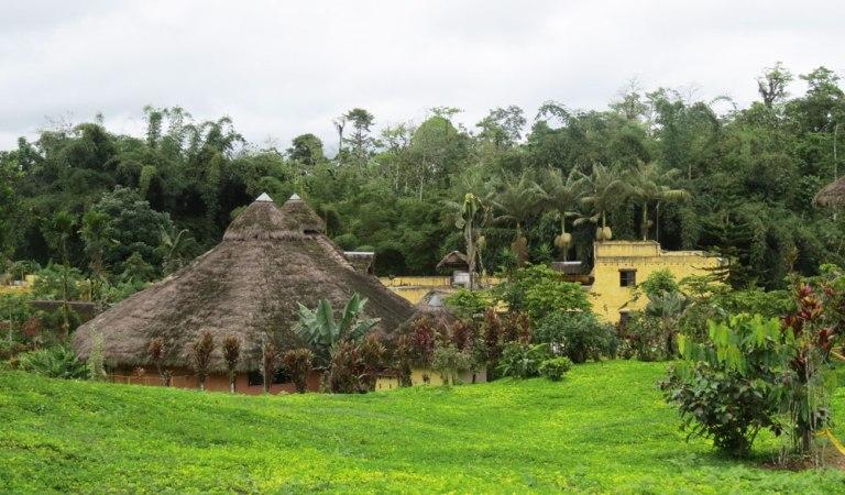 arasha-ecuador-2