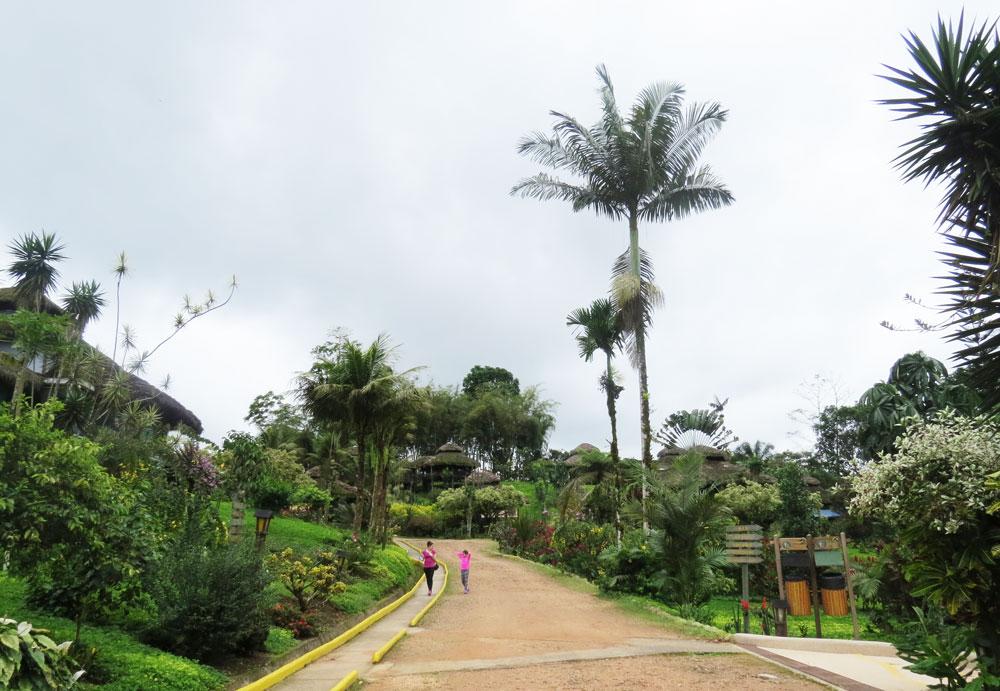 arasha-ecuador-4