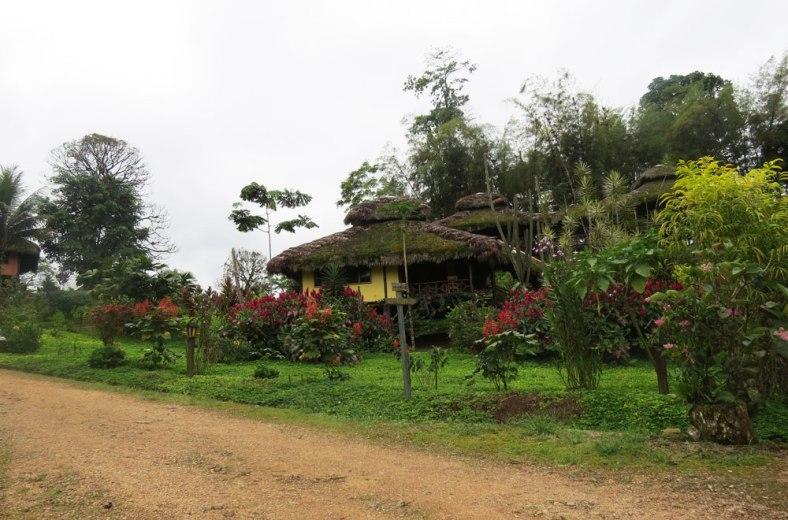 arasha-ecuador-6