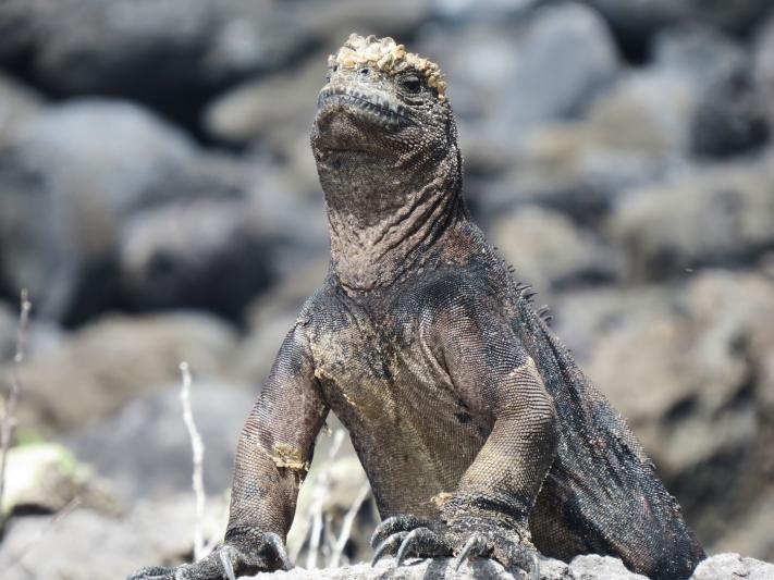 Galapagos-2017-16