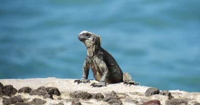 Galapagos-2017-2