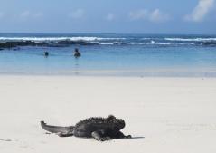 Galapagos-2017-22