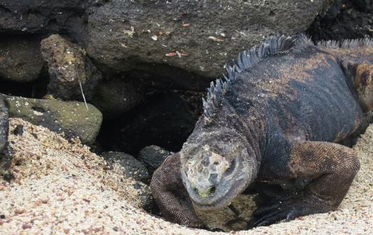 Galapagos-2017-25