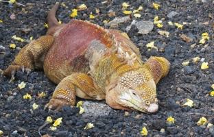 Galapagos-2017-7