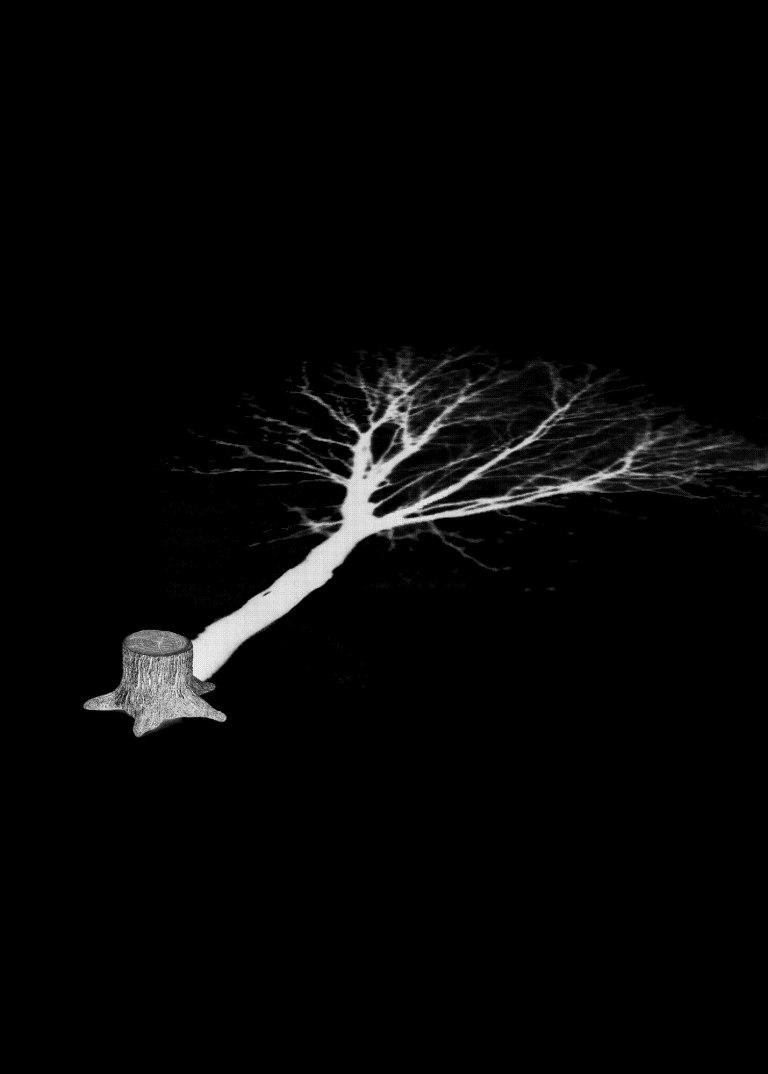 Tree-Shadow-Christopher-Scott